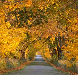 5 Autumn Road Trips