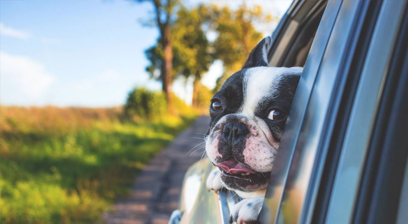 Tips for Driving with Dogs